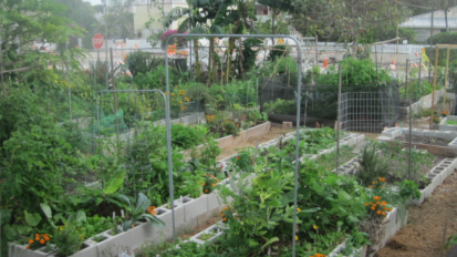 GLEE Community Garden in Key West